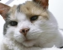 Stevie-gatto-cieco