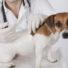 vaccins-du-chien