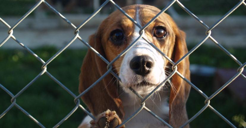 Une-augmentation-du-nombre-d-animaux-abandonnes-cet-ete.jpg