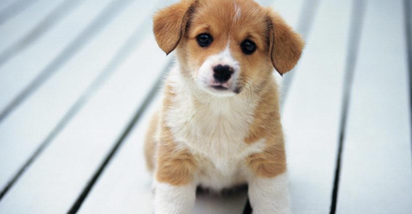 Comment-communiquer-efficacement-avec-son-chien-.jpg